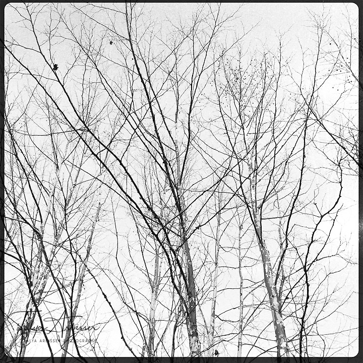 Bare trees in black and white - Dutchess County, New York