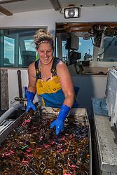 Stern Woman Kachina Watt unloads lobsters aboard 'Star Fisher' at the Vinalhaven Fishermen's Co-op in Vinalhaven, Maine.