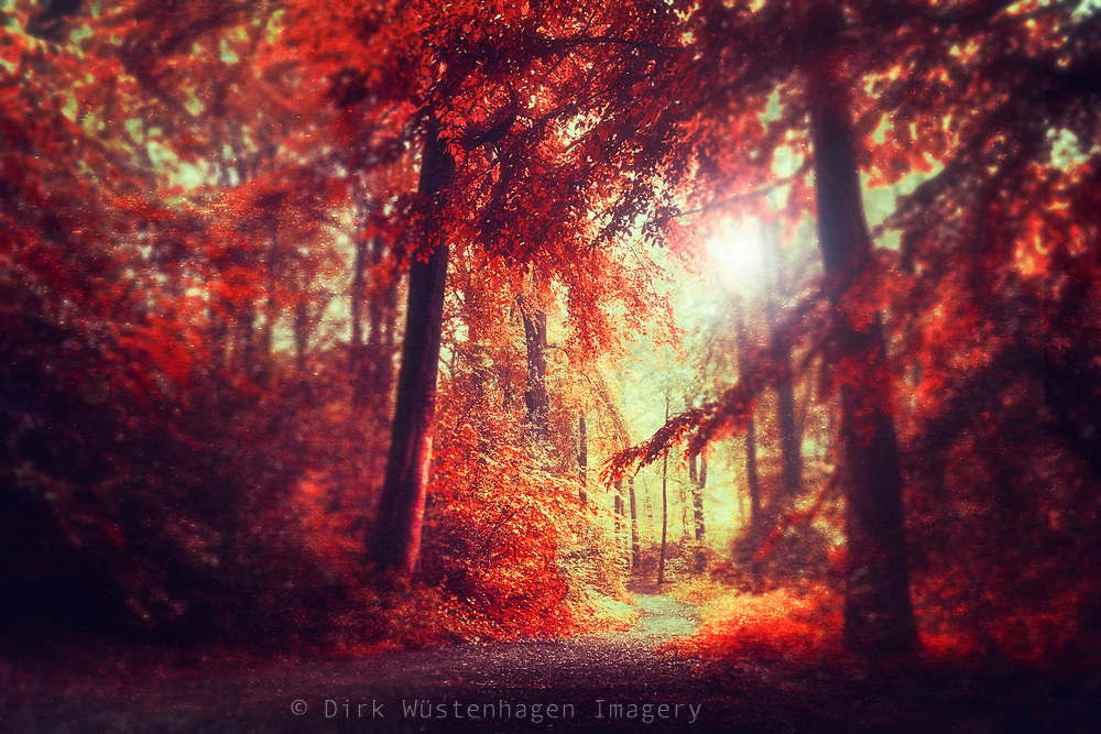 Red tinted forest scenery - photomanipulation<br /> REDBUBBLE prints: http://rdbl.co/2CGM6iA
