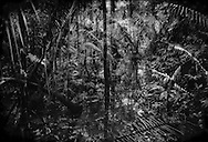 A flooded forest so thick with vegetation that it has become almost abstract in Yasuni National Park's core ITT section, a bio hotspot because of the richness of life.  Near the Peruvian border, Ecuador.  It gets its name because the the Ishpingo, Tambococha, Tiputini Rivers run through it.