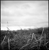 Lopham Fen, Suffolk 2008 (2)