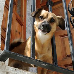 dogs, honden