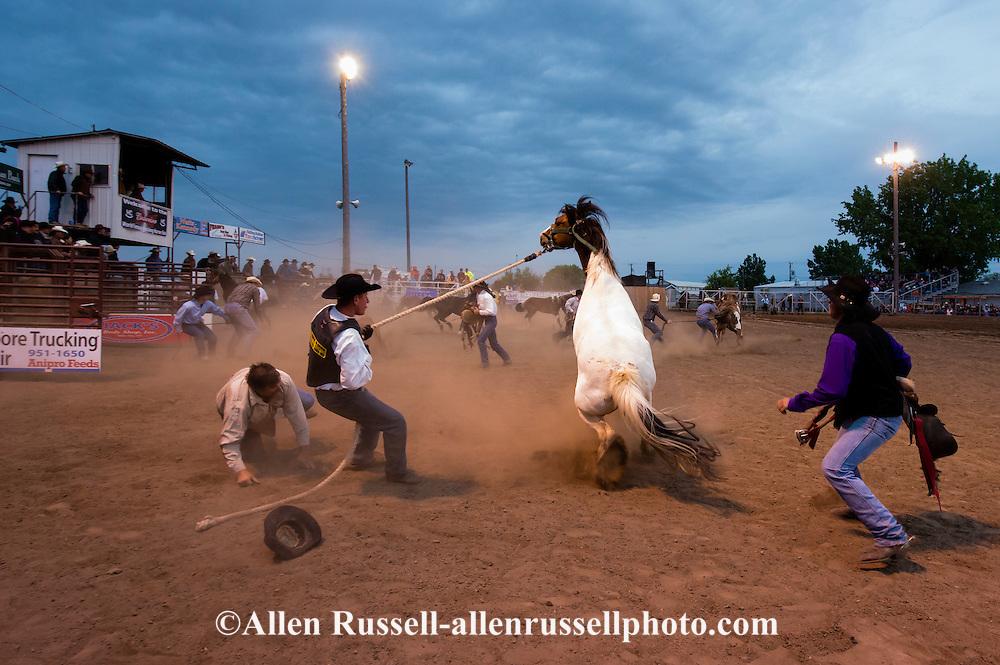 Wild Horse Race, Miles City Bucking Horse Sale, Montana, cowboys