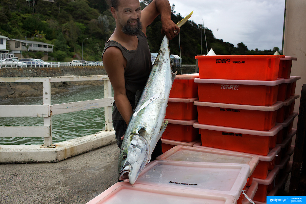 A fisherman holds up one of the catches of the day at the fish docks at Mangonui village, Northland, New Zealand Zealand,  2010 20th November 2010. Photo Tim Clayton.