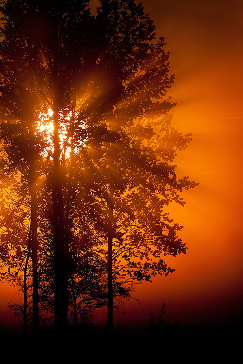 Sun filtering through mist at dawn,  Bergslagen, Sweden.