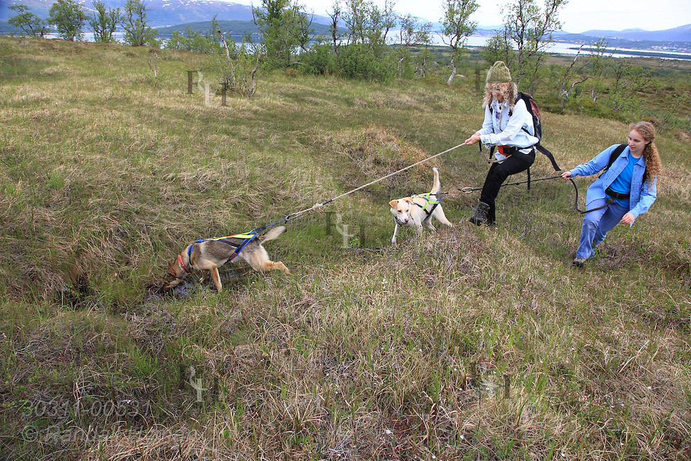 Writer Susan Zimmerman and daughter, Soley Hyman, take Tromso Villmarkssenter sled dogs for summer conditioning hike in fields of Kvaloya Island outside city of Tromso, Norway.