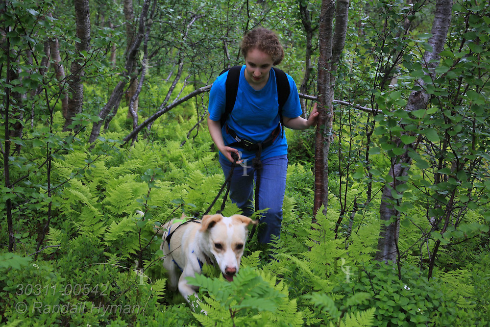 Soley Hyman takes sled dog for summer conditioning hike in woodlands of Tromso Villmarkssenter on Kvaloya Island outside city of Tromso, Norway.