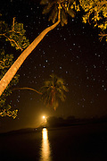 Full moon with stars  Coconut Palm tree Taveuni, Fiji