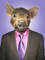 Piglet dressed business man