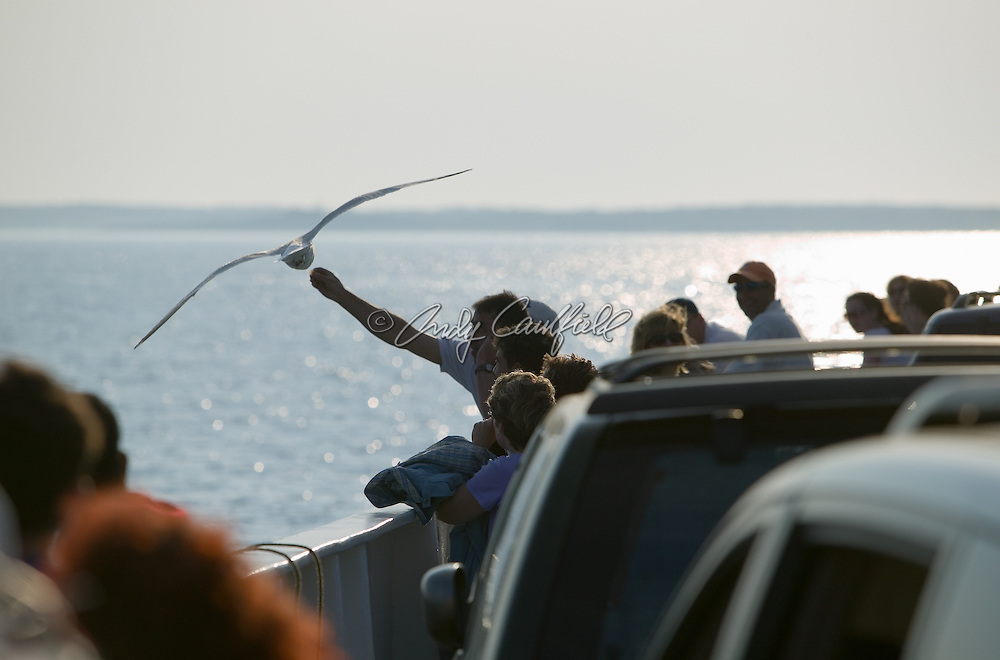 Tourists, feeding seagulls on the ferry to Martha's Vineyard, MA.