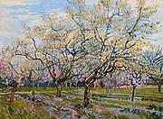 Painting of The White Orchard, 1888. By Vincent van Gogh. Oil on Canvas. Part of an intended triptych of orchard paintings by Van Gogh.