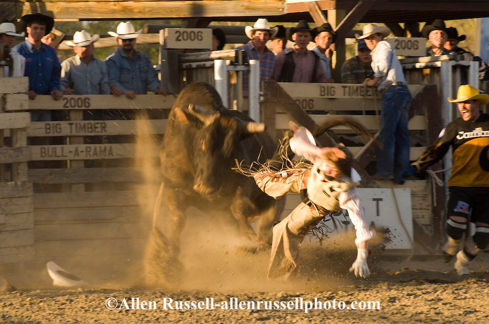 Bull Rider bucked off and thrown through the air at Big Timber, Montana rodeo