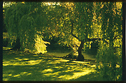 Maidenhead, Berkshire, UK.  <br /> <br /> General view,  Raymill Island. River Thames,  <br /> <br /> <br /> Wednesday. 24.05.2017 <br /> <br /> © Peter SPURRIER,<br /> <br /> Contax G2. 28/45/90 mm len's. Rollei Chrome 200