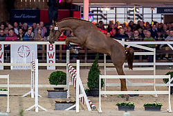 054, Raoul Dwerse Hagen<br /> BWP Hengstenkeuring -  Lier 2020<br /> © Hippo Foto - Dirk Caremans<br />  17/01/2020