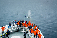 Viewing a blue whale from the National Geographic Explorer bow near Anderson Island, Antarctica