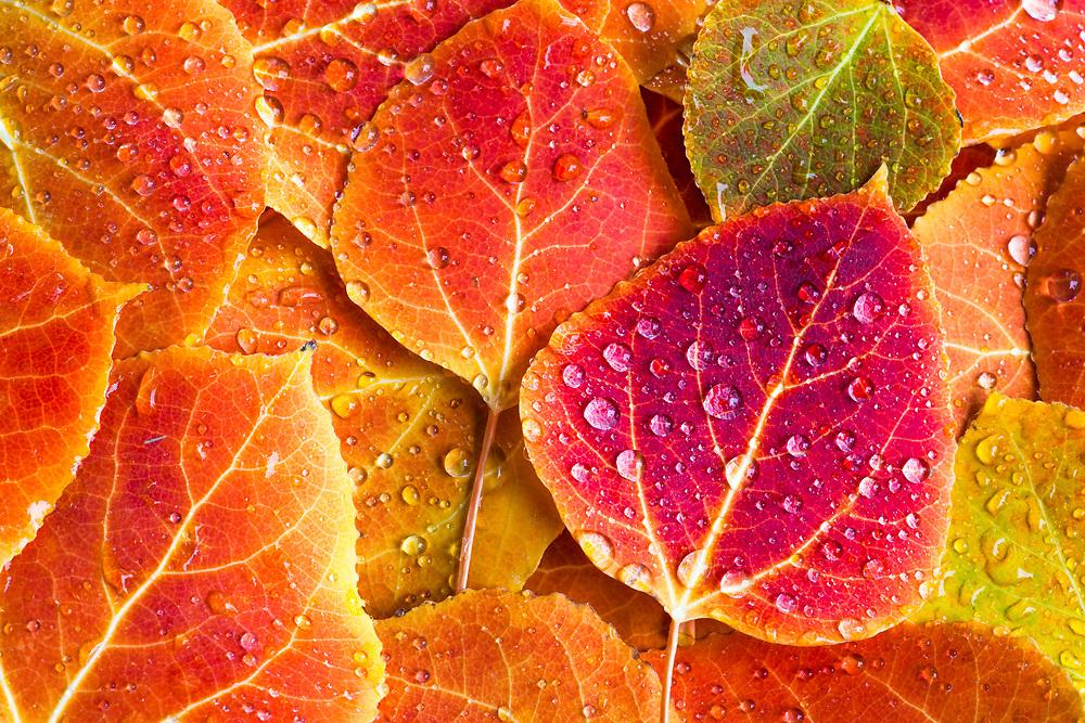 Fallen leaves and rain drops..
