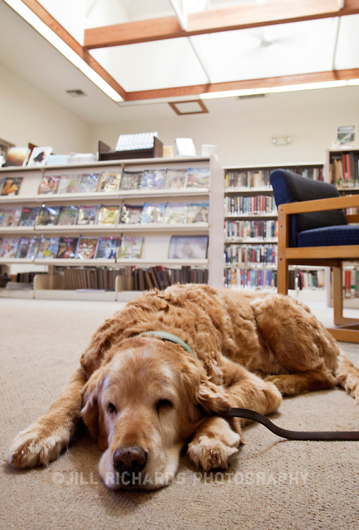 The public library in Patagonia, Arizona welcomes dogs. Patagonia, located in Southern Arizona, is known for its birding and wineries.
