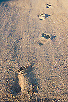 Footprints in the sand of a tropical beach in Fiji..
