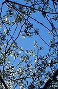 Under a cherry blossom tree