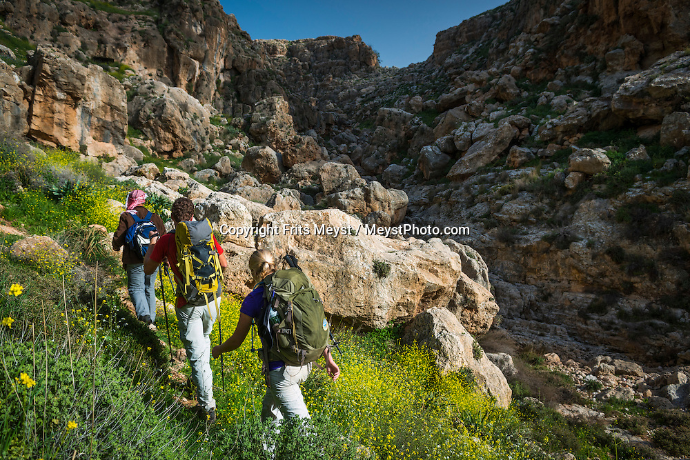 Palestine, March 2015. Hikers in Wadi Auja on the trail from Duma to Kafr Malek. The Abraham Path is a long-distance walking trail across the Middle East which connects the sites visited by the patriarch Abraham. The trail passes through sites of Abrahamic history, varied landscapes, and a myriad of communities of different faiths and cultures, which reflect the rich diversity of the Middle East. Photo by Frits Meyst / MeystPhoto.com for AbrahamPath.org
