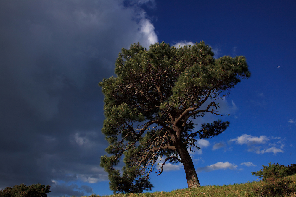 A windswept tree seems to hold back the clouds in the late afternoon at Cathedral Cove on the Coromandel Peninsula on the north island of New Zealand.