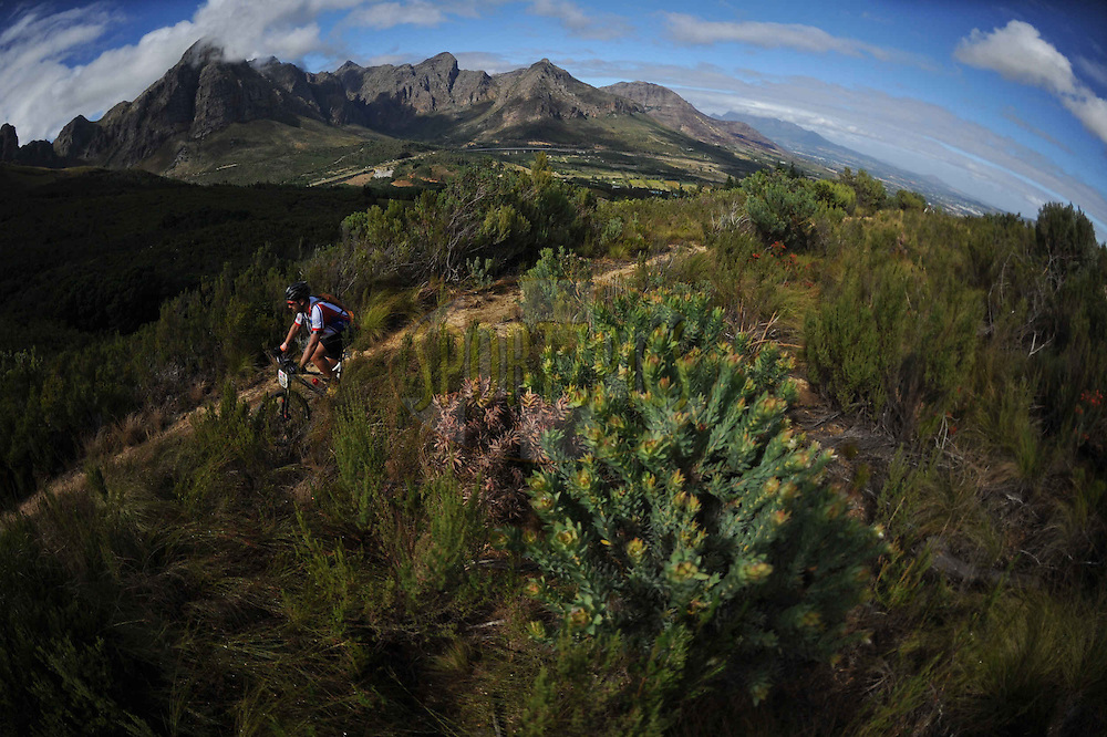 A rider cycles through a local protea farm with the Klein Drakenstein peaks in the background during stage 6 of the 2013 Absa Cape Epic Mountain Bike stage race from Wellington to Stellenbosch, South Africa on the 23 March 2013..Photo by Kelvin Trautman/Cape Epic/SPORTZPICS