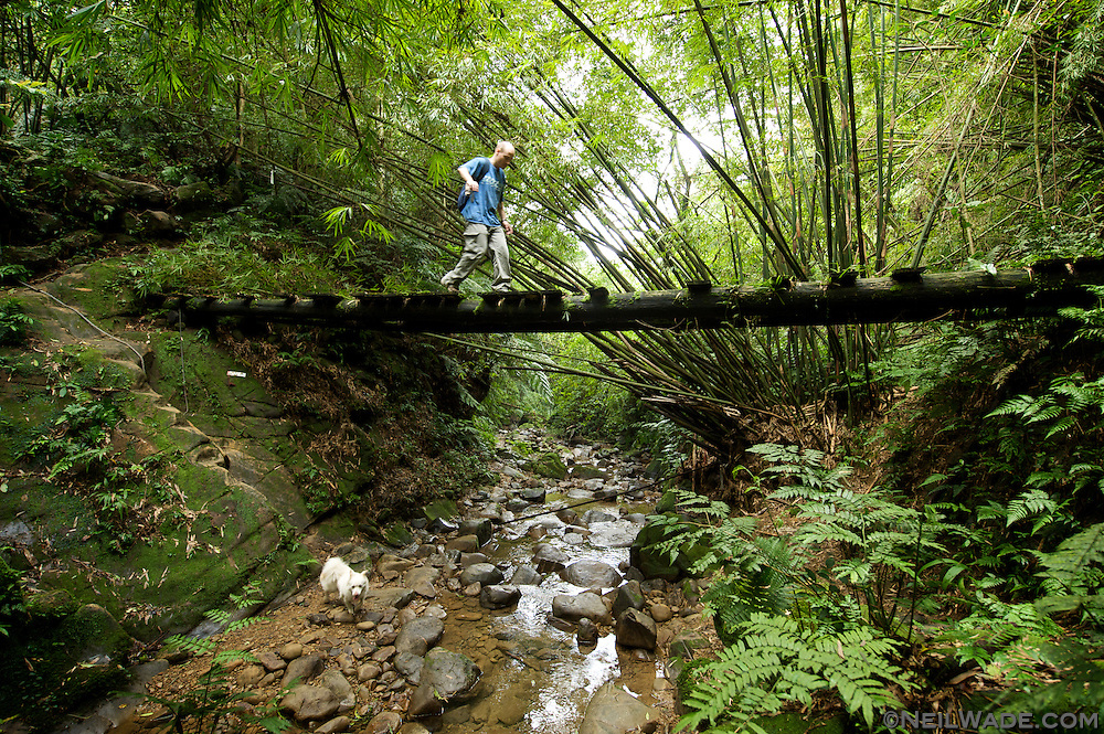 A hiker crosses a dangerous bridge in a lush forest near Taipei, Taiwan.