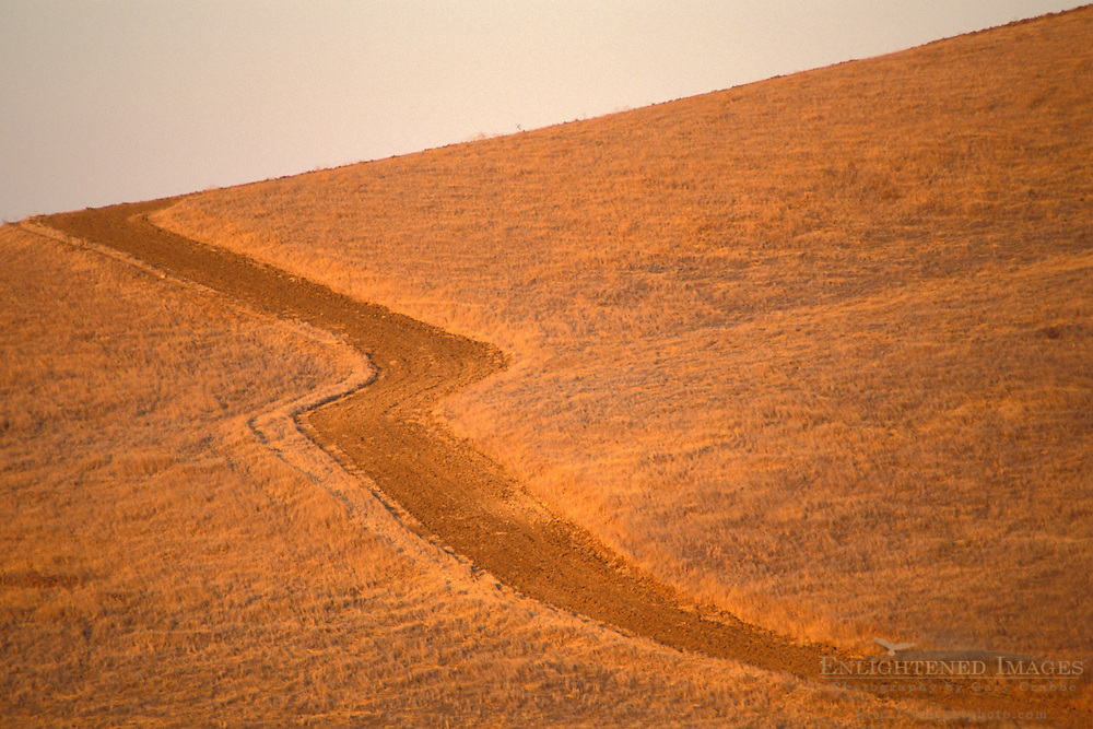 Plowed firebreak through grass pasture field hills in summer, Altamont Pass, Alameda County, California