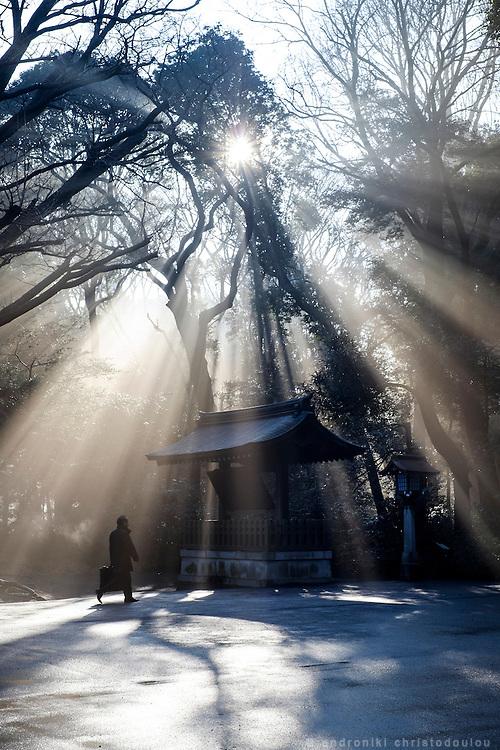 Garden of Meijijingou shrine in a foggy morning.