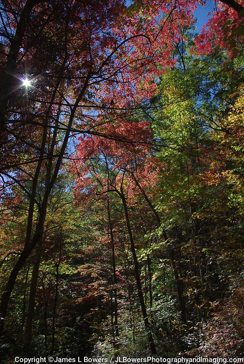 Smoky Mtns Fall Colors & Sunstar