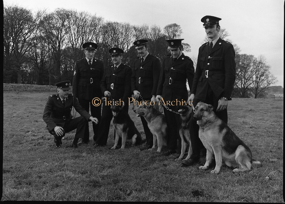 Black Dog Society Ireland