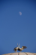 Uzbekistan, Tashkent. Crane sculpture on the roof of Congress Center, under the rising moon.