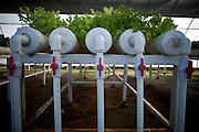 America, Latino America, Central America, Mexico, Baja California. - 28.01.2010, DIGITAL PHOTO, 48 MB, copyright: Alex Espinosa/Gruppe28