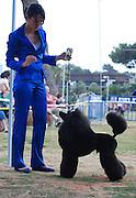 Israel, Tel Aviv, The International Dog Show 2010 Black Medium Poodle