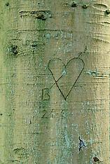 2006 Arborglyphs, Beschreven bomen.