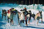 Reindeer races, Lapland, Finland