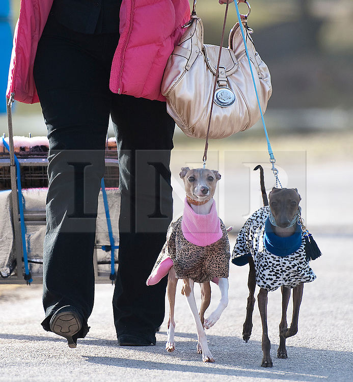 © London News Pictures. 08/03/2012. Dogs and their owners arrive on Day one of Crufts at the Birmingham NEC Arena on March 8, 2012 in Birmingham.  Crufts, which is the largest annual dog show in the world, hosts over 20,000 dogs and owners who compete in a variety of categories. Photo credit : Ben Cawthra/LNP