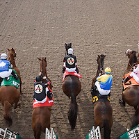Thoroughbred Racing 2007 - Gallery 01