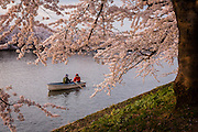 Some tourists prefer to enjoy the cherry blossoms by rowing in the many small lakes in the park