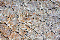 These ancient mudcracks were made thousands of years ago when this area of New Mexico was covered by an ancient sea.  These mudcracks are what is left of a dried mud puddle, one that was protected by sand and covered by layers of rock.  Clayton Lake State Park, New Mexico.