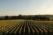 Patton Valley Vineyards, Yamhill-Carlton, Willamette Valley, Oregon