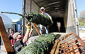 11.26.14-Christmas trees