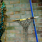 An old children's basketball hoop against a brick wall with winter ivy depicting times and opportunities past.