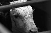 Norwich Livestock Market - Black & White