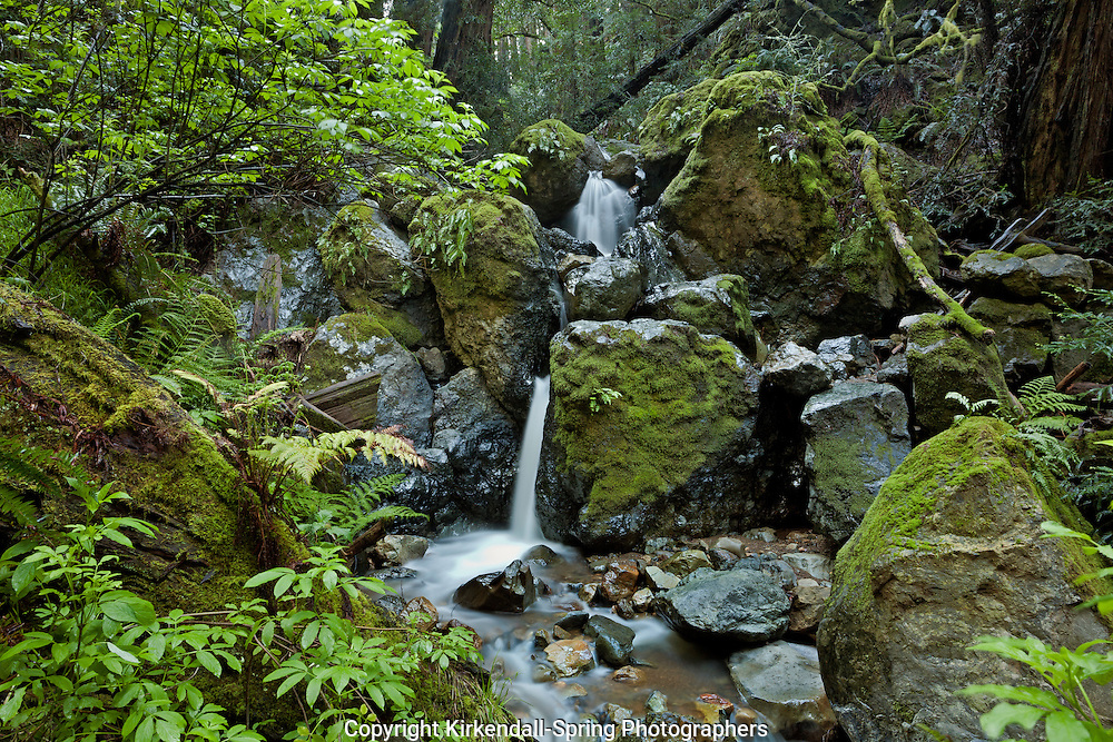 CA02569-00...CALIFORNIA -  A small cascade on Webb Creek viewed from the Steep Ravine Trail in Mount Tamalpais State Park.