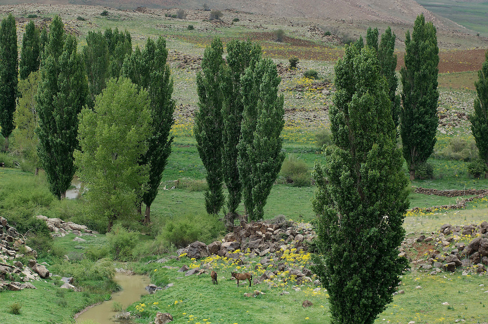 Meadows near Azrou, Morocco
