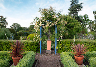 Rosa banksia 'Lutea', yellow climbing roses on a wooden arch in The Laskett Gardens, Much Birch, Herefordshire, UK