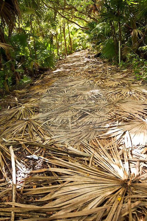 Palm fronds cover the ground at the Key West Botanical Garden at Stock Island, Key West, Florida.