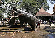 Elephant refreshing himself during the August Esala Perahera in Kandy.