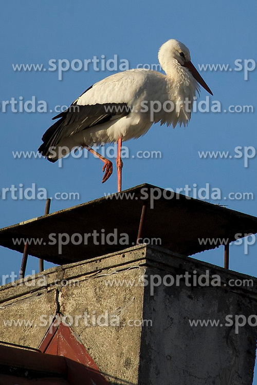 THEMENBILD - Wei&szlig;storchauf einem Schornstein in Gutach im Schwarzwald // a whitestork on a chimney in Gutach in the Black Forest, Germany on 2015/03/06. EXPA Pictures &copy; 2015, PhotoCredit: EXPA/ Eibner-Pressefoto/ Fleig<br /> <br /> *****ATTENTION - OUT of GER*****